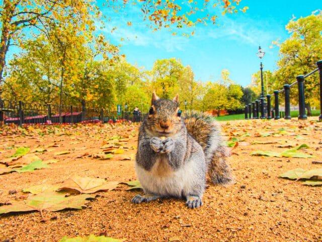 ardilla en un parque de Londres