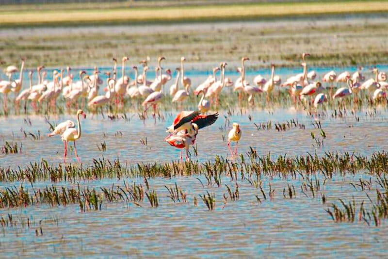 Los mejores lugares naturales de España: Doñana