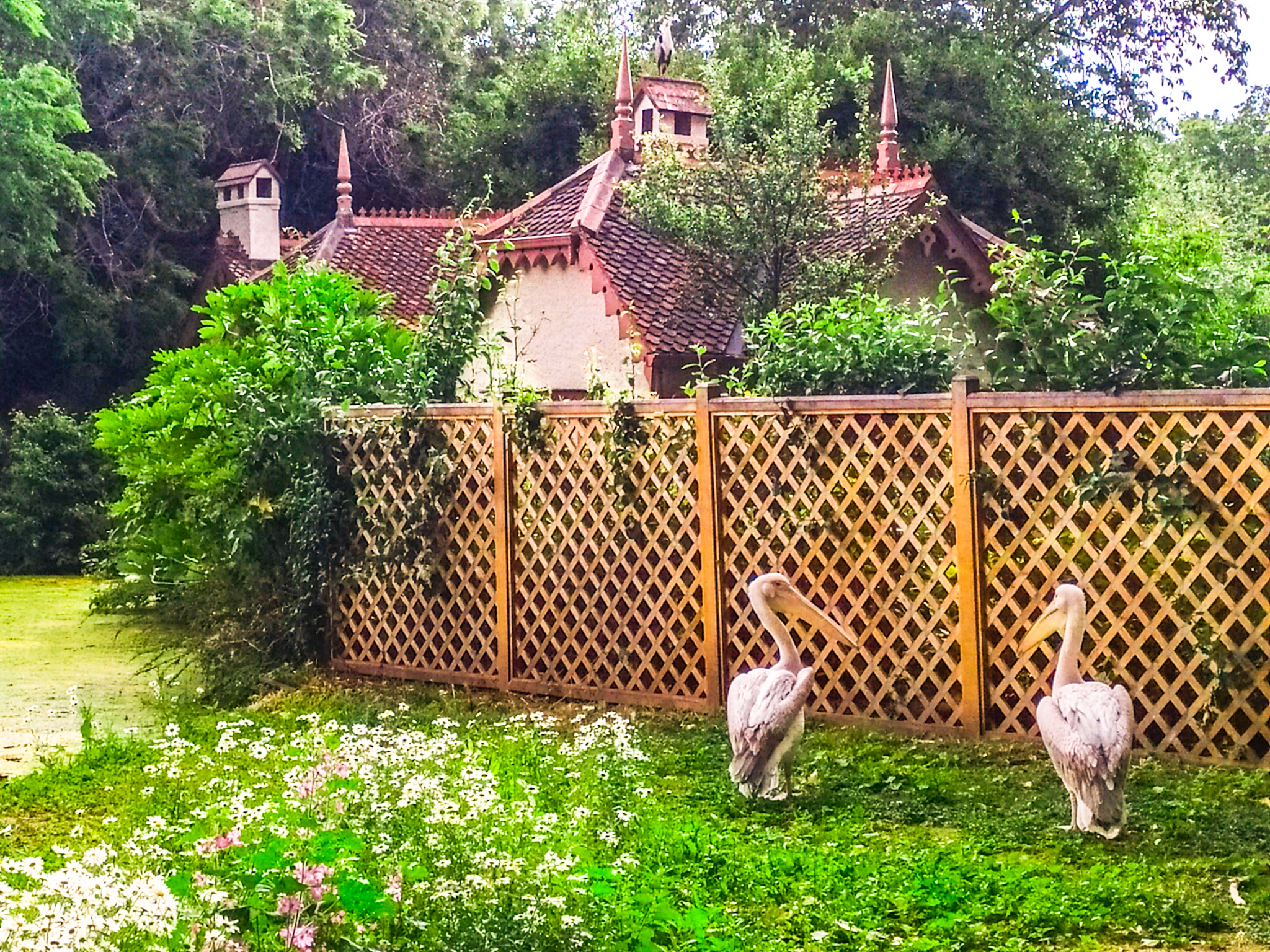 Las leyes más absurdas de Londres: los pelícanos del parque de St Jame´s