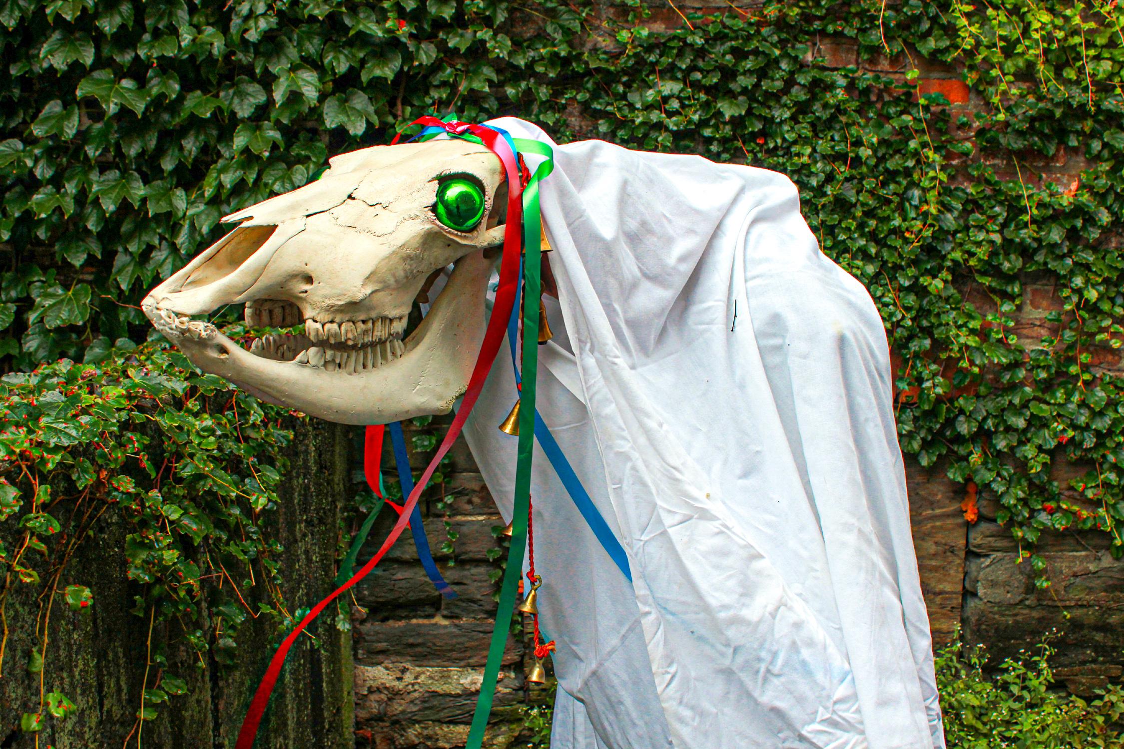 cómo se celebra la navidad en el resto del mundo: calavera de yegua durante el festival de Mari Lwyd en Gales