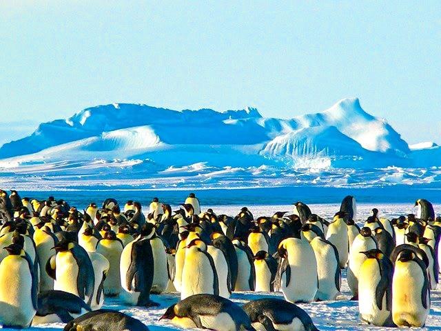 Pingüinos en la Antártida, uno de los destinos favoritos para viajar en 2021