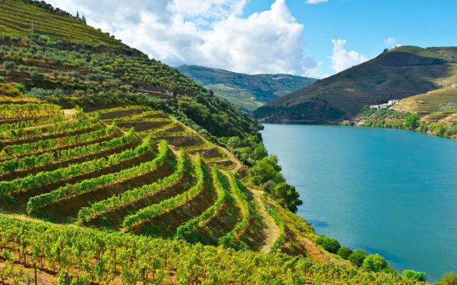 Terrazas de viñedos bordeando el río Duero