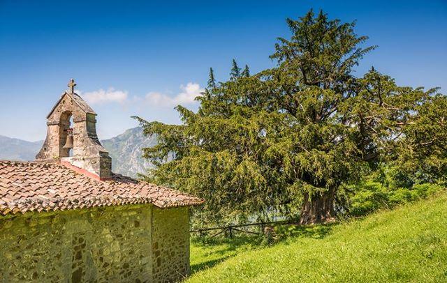 La iglesia y el texu de Bermiego, el monumento natural más importante que ver en el interior de Asturias